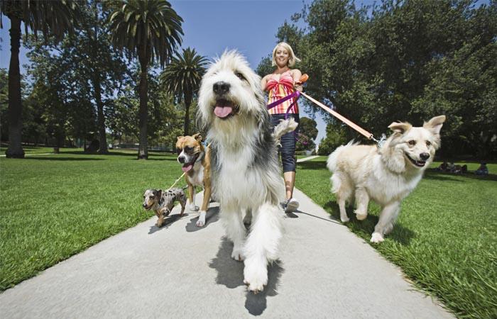 Dành thời gian dẫn thú cưng đi dạo