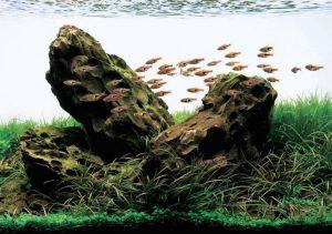 lũa và đá trong hồ thủy sinh