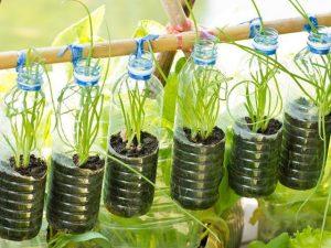 Những chậu cây trong vườn nhà từ chai nhựa