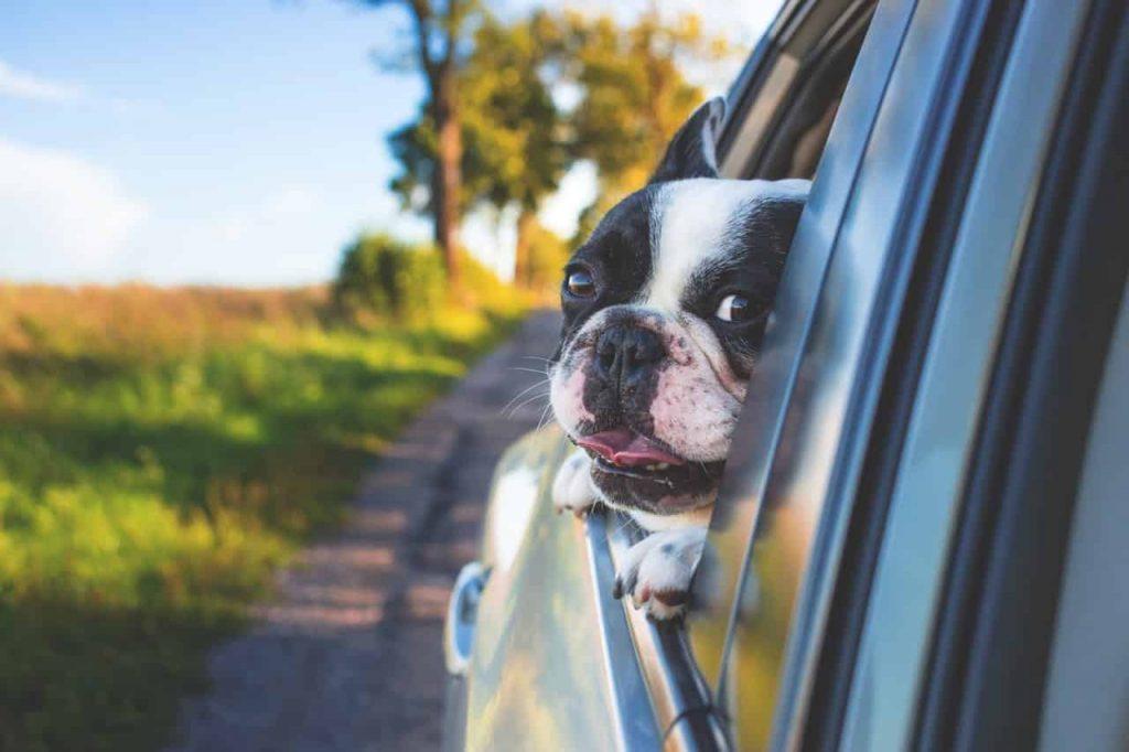 Những kinh nghiệm vận chuyển thú cưng an toàn