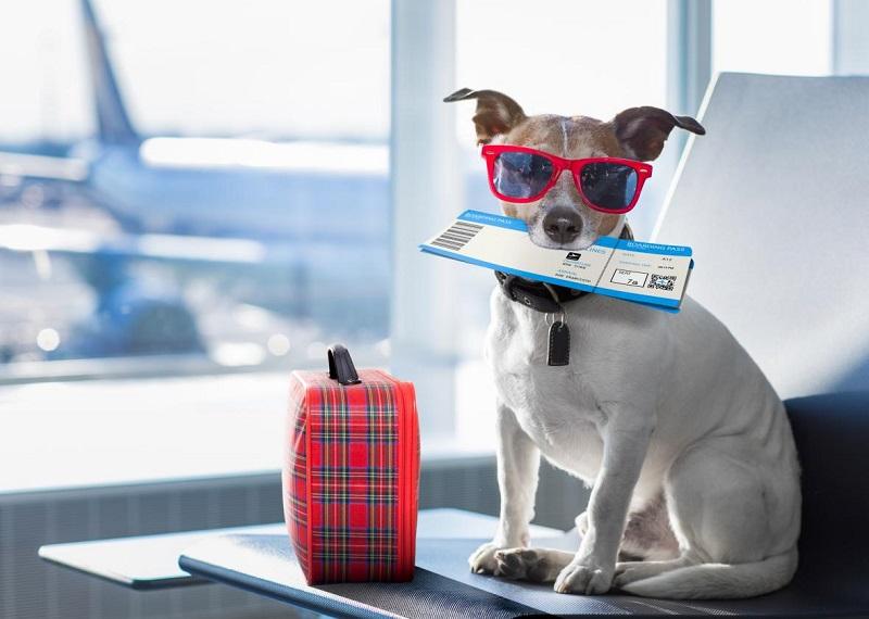 Vận chuyển thú cưng bằng máy bay