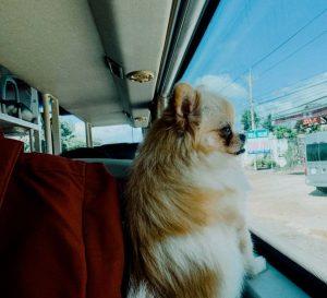 Vận chuyển chó đi xa bằng xe khách