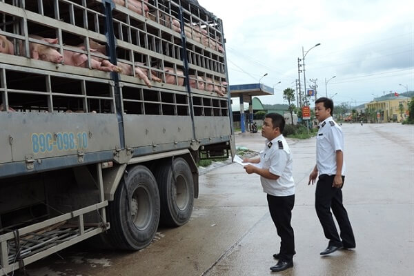Những quy định vận chuyển gia súc đi xa