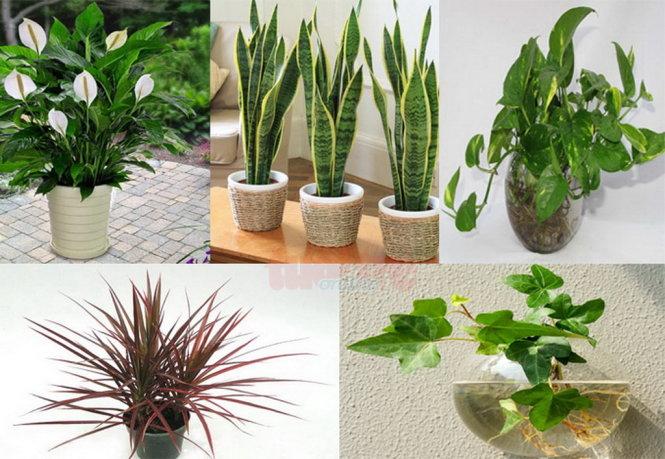 Tổng hợp trồng cây phong thủy trong nhà theo tuổi