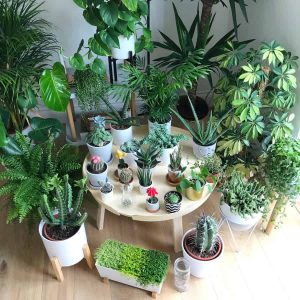 Vì sao nên trồng cây xanh phong thủy trong nhà