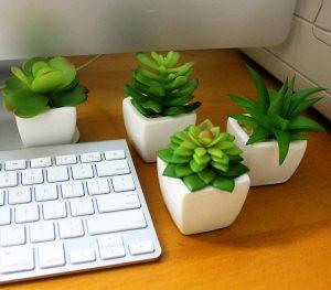 Hoa sen đá đang được nhiều người yêu thích bởi vẻ đẹp nhỏ nhắn, xinh xắn