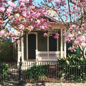 Cây Hoa Mộc Lan cung cấp nhiều vượng khí cho ngôi nhà